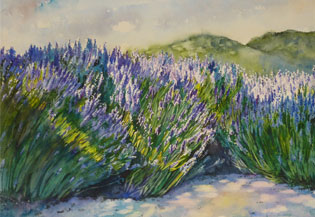 Wine Country Lavender, 2013